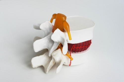 kręgosłup model